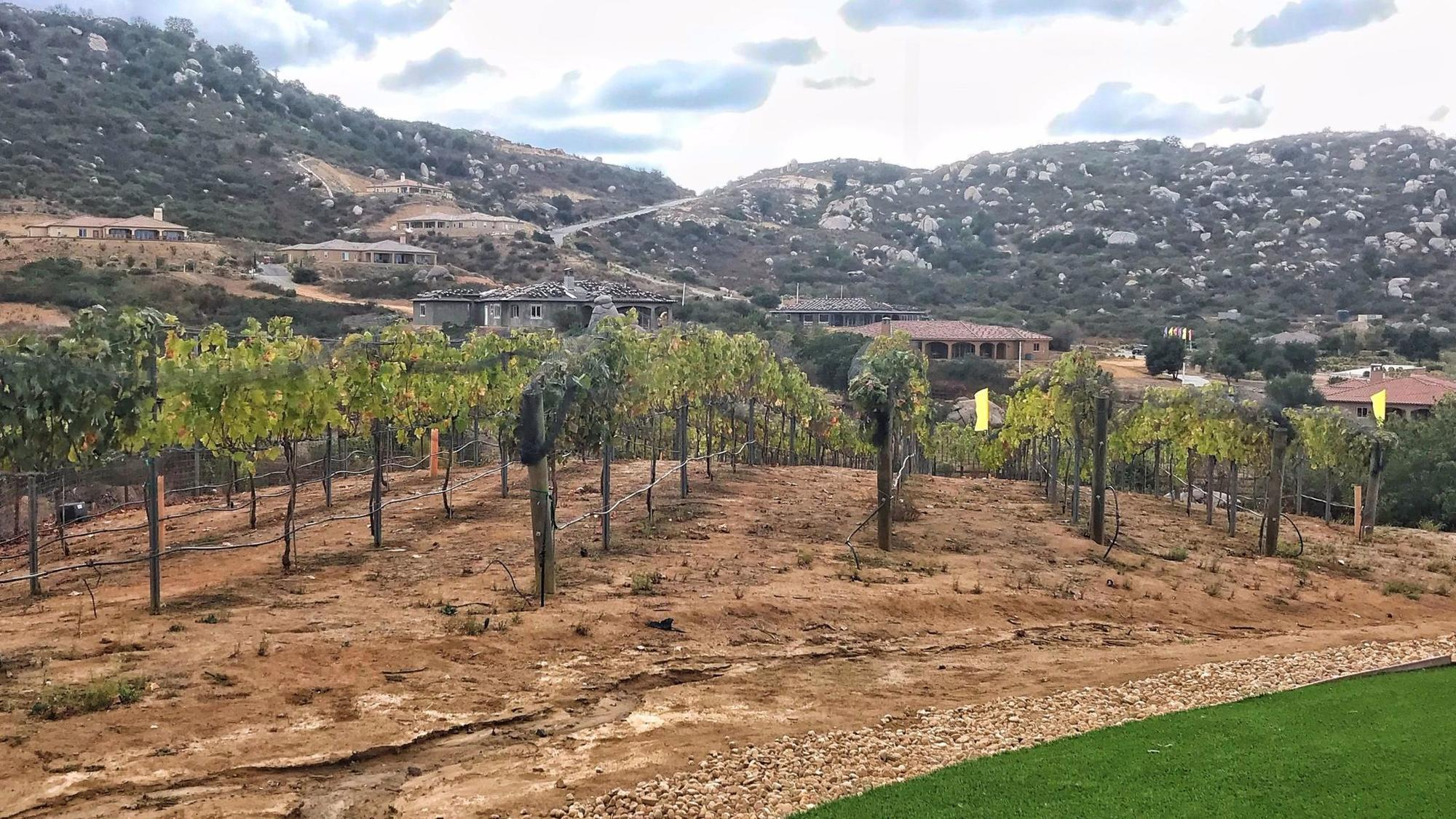 These homes come with your own vineyard